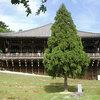 3月を代表する奈良のイベントといえば[お水取り]でしょ!