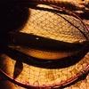 大雨前の駆け込みバチパターン調査のオハナシ。