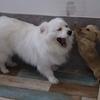 犬の幼稚園通学8日目・今日はグルーミングも!