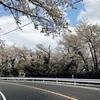 北関東はまだ桜の季節 BRM415 老越路 でNEWwheelを試してみた