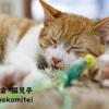 愛猫家必見!鎌倉の猫カフェ「猫見亭」で保護猫とイチャつこう!
