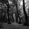 ブーローニュの森を探索すると、既に秋が訪れていた