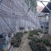 植木の苗床 挿し木