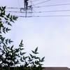 作曲工房 朝の天気 2017-08-24(木)晴れ