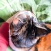 【愛猫日記】毎日アンヌさん♯131