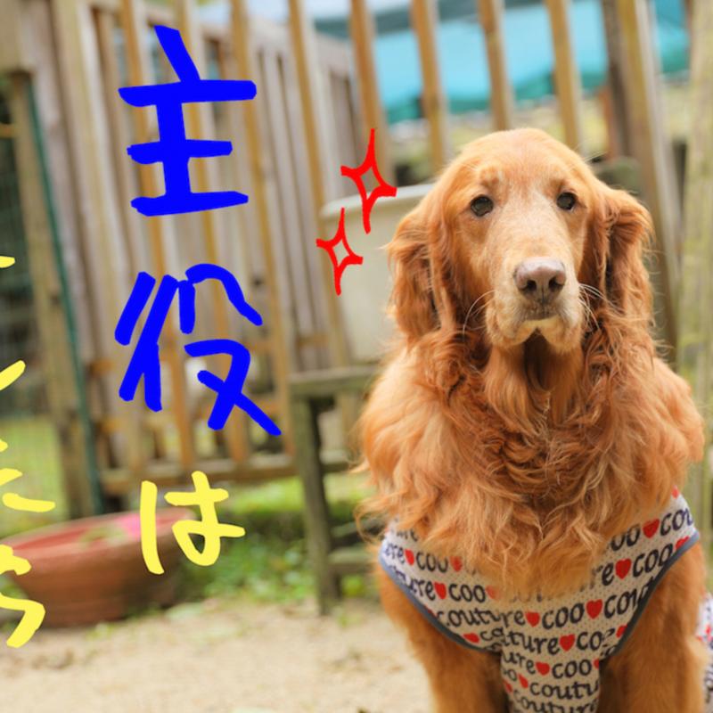 戌年はワンコと一緒に♡南丹市のほっこり古民家ドッグカフェvol.2