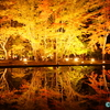 令和1年11月11日(R1.11.11)― 3年目開始記念(逆さ紅葉画像先行公開) ―