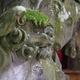 加賀國逆立ち狛犬「石浦神社」