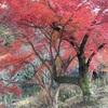 岸和田 紅葉 「牛滝山 大威徳寺」へ、今宵は紅葉を見に行こうよ!府内ナンバーワン!その理由とは!?