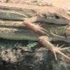 カナヘビ ~お金がかかる我が家の小恐竜~