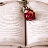 読書の秋におすすめの本〜7つのジャンルのまとめ