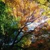 秋のおさんぽ便り、その4〜北鎌倉編①