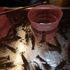 2019年8月 台湾旅行記⑨ 3日目-Ⅲ ~士林でエビ釣体験! 釣ったえびは食べられます ~