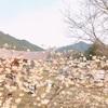 桜の似合うキャンプ場。南光自然観察村でお花見キャンプ!フィンランド式サウナも♫