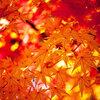 秋の豆知識!なぜ秋になると紅葉するの?