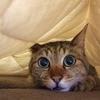 ネコを飼っていれば女性と仲良くなりやすい話 vol.2