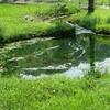 源流を探して~猛暑の鶴見川、多摩川サイクリング93㎞~(その2)