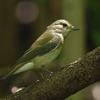 淀川河川敷の野鳥 。゚(゚´Д`゚)゚。