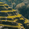Ubud Tour - One Day Trip to Visit Ubud Places of Interest