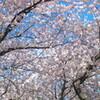 4月の甘夏書店