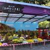 弥彦神社で参拝&菊まつりを鑑賞