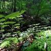 まるでジブリ!苔と滝の森あるき「御岳山」ロックガーデン