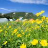 灼熱の白山はお花の山でした