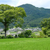 京都大原に「悲運の惟喬親王」の墓と棚田を訪ねる