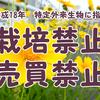 今の季節、河川敷に咲いている黄色い花は要注意。