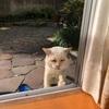ぶささんに学ぶ、野良猫の免疫力と回復力 ~怪我から2日目&3日目~