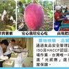 台湾の新鮮なマンゴーとライチを日本から購入できるサービス