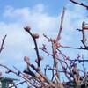 冬の庭で―春に向けて思案中