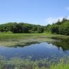 野幌森林公園は楽しい!13 原の池のカワセミとカイツブリ