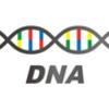 遺伝子検査してきました!【遺伝性乳がん・卵巣がん症候群(HBOC)】