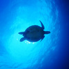 ♪透明度30m(゚∀゚)到着・半日でも慶良間海域でファンダイビング♪〜沖縄ダイビング〜