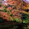 【秋の京都】きれいな写真が撮れました!