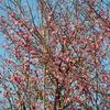 2月16日 梅の花