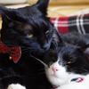 今日の黒猫モモ&白黒猫ナナの動画ー653