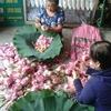 蓮畑の帰りに行ってみませんか?花市場と蓮茶店 in Hanoi