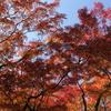 北の丸公園の紅葉状況(2016/11/22)