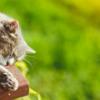 ネコ治療薬研究への寄付がクローズアップされた3つの理由