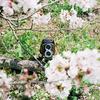 国産二眼レフ Minolta AUTOCORD のファーストロール(作例有り)