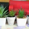 【ダイソー】100均のミニ人工観葉植物フェイクグリーン【セリア】