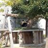 神戸市立動物園