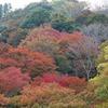 奈良県)吉野山ハイキング。紅葉。