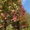 秋の水戸市植物公園