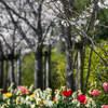 初夏の陽気に、花一気咲き‥