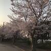 桜見ながらラン