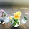 庭の花をフラワーベースに