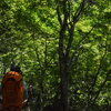 立秋の剣山遊山 木陰道